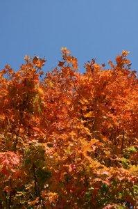 """Orange"" you glad it's fall?"