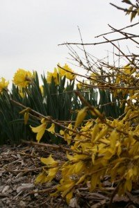 """Say """"yellow"""" to spring!"""