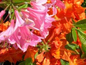 Pink and Orange combination