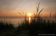 Sunset grass edit