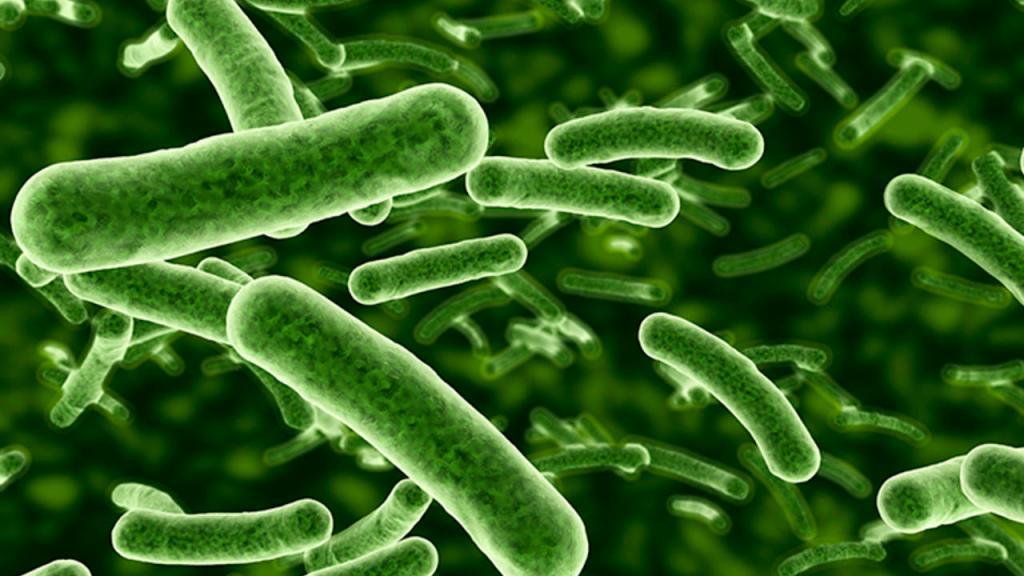 بكتيريا البروبيوتيك