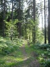 2.5 km-Runde - zum Ascherhuebel