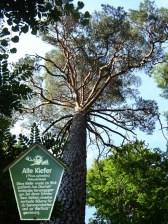 30 km - kurz vor Hartha - Naturdenkmal