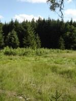 HM + 30 km - die Triebischwiesen