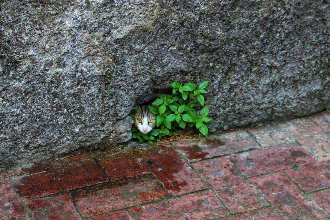 cat in wall
