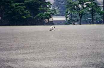 1999 Japan -Tokyo - Scans 042