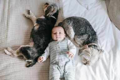 morkies dogs sleeping near little baby on bed