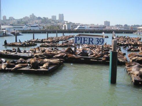 Pier39Seals1