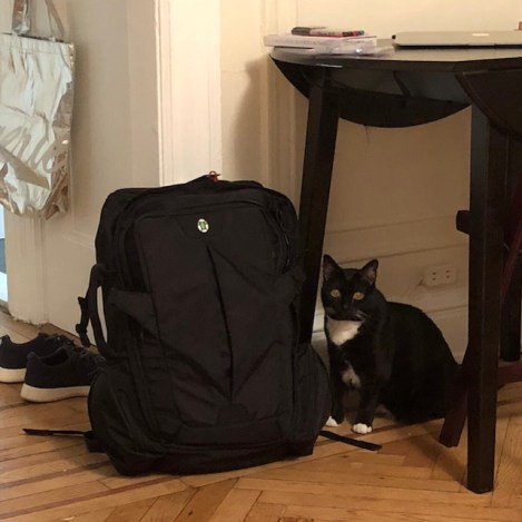 packingfordenver