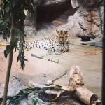 The Denver Zoo in Colorado