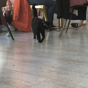 Some of the kitties in the cafe!