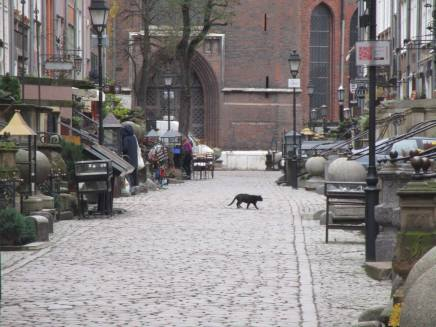 Feral Cat Communities of Gdansk, Poland