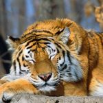 How To Stand Up For Yourself: Never Awaken A Sleeping Tiger