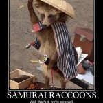Samurai Raccoon Meets Samurai Katana from NatGeo's 'Fight Science'