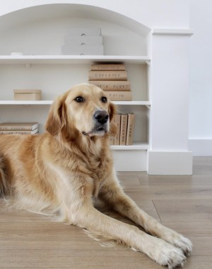 laminaat, huisdieren, hond, honden, vloer, laminaat leggen, v-groep, laminaat met grip, interieur, interieurinspiratie, thathomepage, (th)athomepage