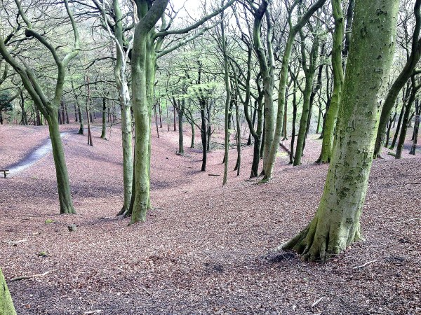 Tandle Hill 8