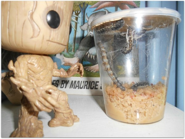 Groot and the caterpillars