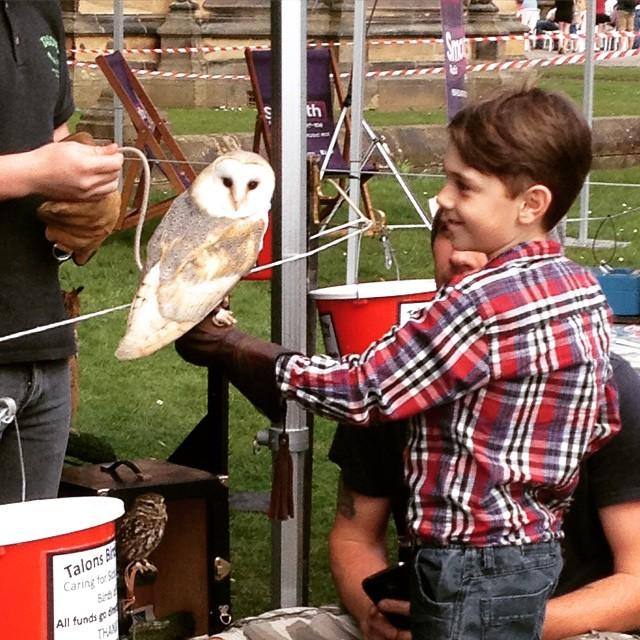 GBFF Louis Owl
