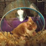 Oh crap! The hamster's dead