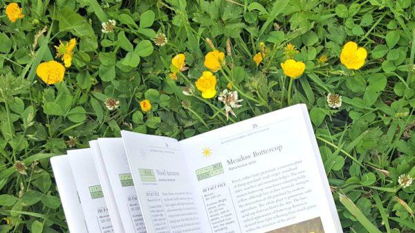 Wild plants: Buttercup