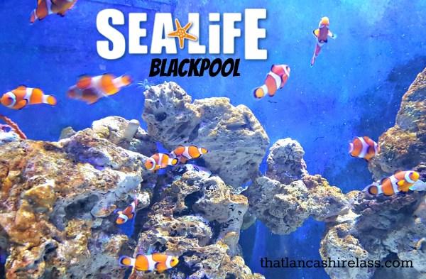 Sea Life title