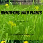 Identifying wild plants with kids