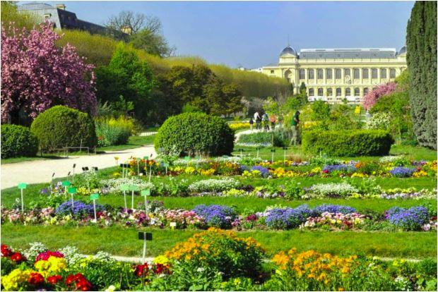 colourful flowers in Jardin des Plantes, Paris