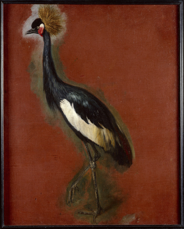 Painted study of a Crowned Crane, Pieter Boel (1622 – 1674), Louvre