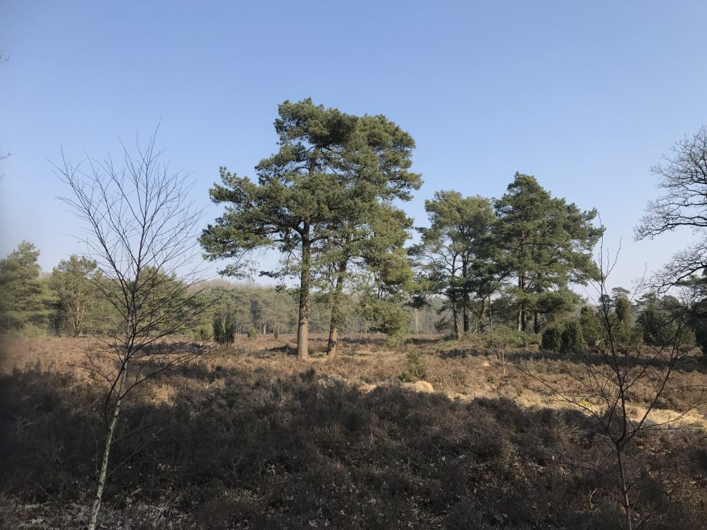 Goede voornemens van 2018: meer van eigen land ontdekken. Nationaal park Dwingelderveld, Nederland