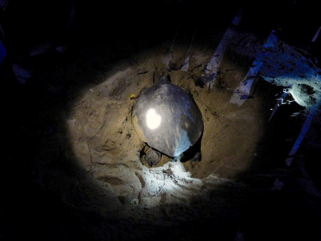 Het prachtige Turtle Island, Maleisisch Borneo