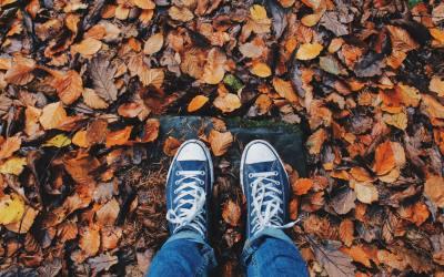 fall, autumn,