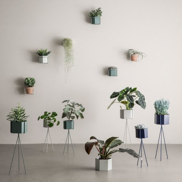 green_ferm_living_plants