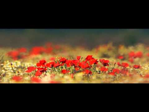Haarp Cord – Primavara (feat. Chimie)