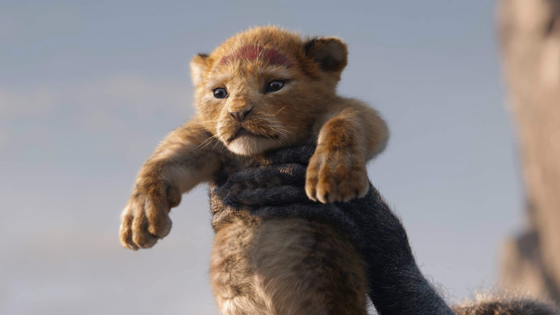 The Lion King Clip: Can You Feel the Love Tonight?