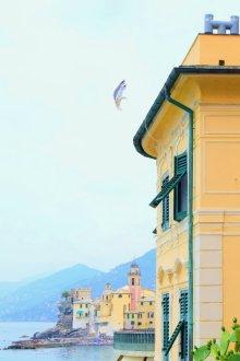 camogli,liguria,italy,sea,seagull