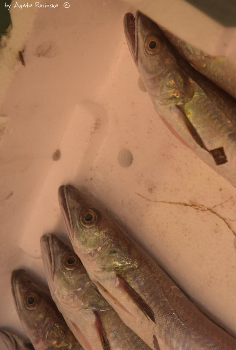 morszczuk,ryba,liguria,wlochy,gotowanie