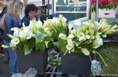 flowers on the open air market
