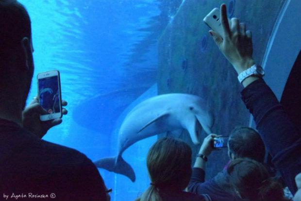 Gdzie znajduje się największe oceanarium we Włoszech?