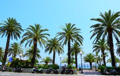palms Noli