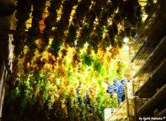 grapes Sciacchetra