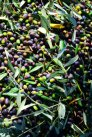 picked olives