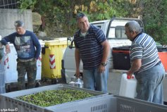 preparing olives