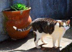 cat in Le Grazie