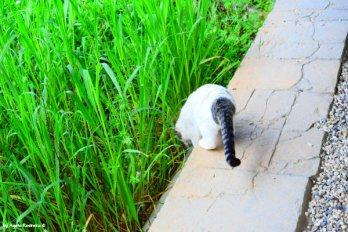 private cat guide