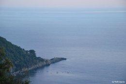 punta chiappa Liguria