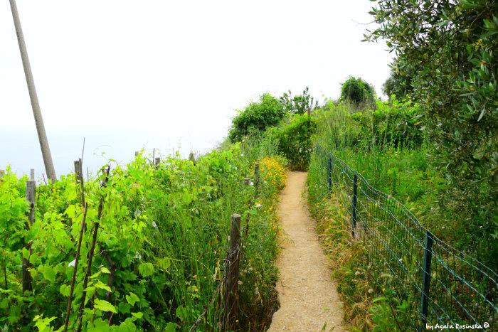 trail Volastra Corniglia