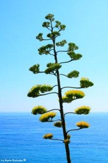 plants Monterosso