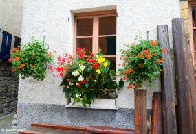 flowers in Santo Stefano d'Aveto