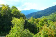 forests in Liguria