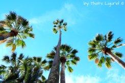 Villa Durazzo palms
